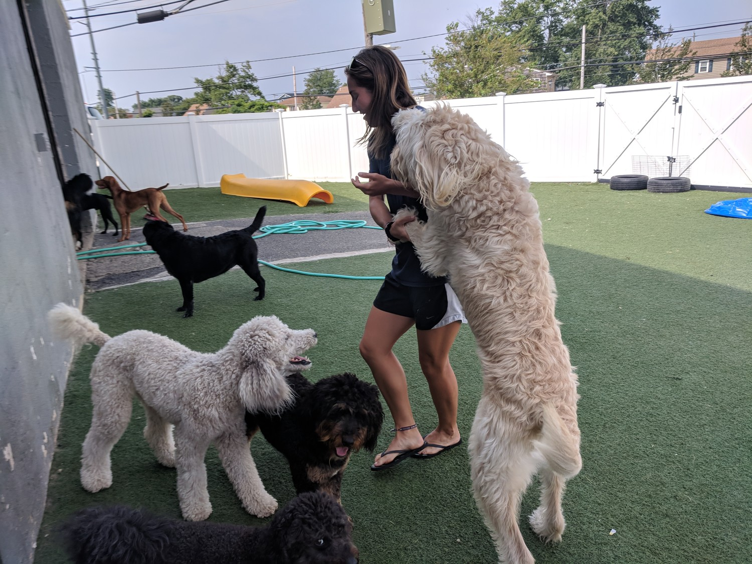 "At Hounds Town USA in Island Park, the dogs being cared for are not kept in kennels and are allowed to roam free in the backyard, playing with each other. ""No collar, no rules,"" said employee Courtney Sills."