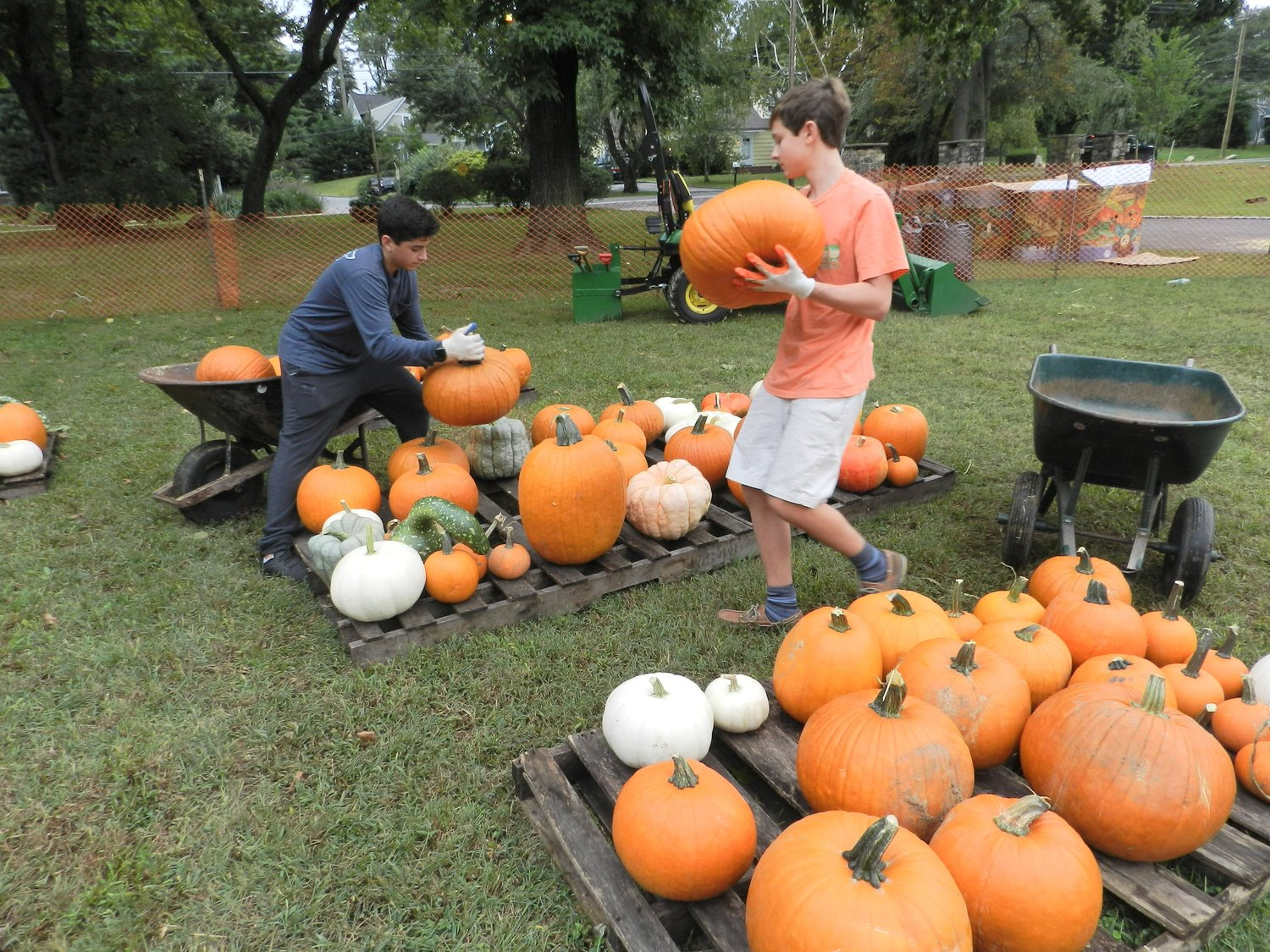 North Shore High School students Giacomo D'Alessandro, left, and Atticus Bartlett unloaded a plethora of pumpkins from wheelbarrows.