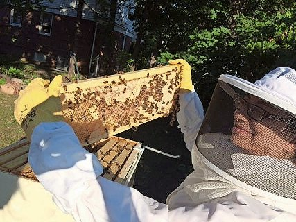 Daryl Altman and her husband, Robert Shepard, maintained a honeybee hive in their backyard for more than a year until village officials removed it in June 2017, saying that it violated village code. In response, the couple is suing village officials for $5 million for what they allege is a violation of their rights and property.