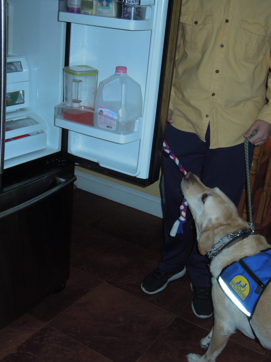 Dragon demonstrates that he has retained the full range of skills, including opening the refrigerator.