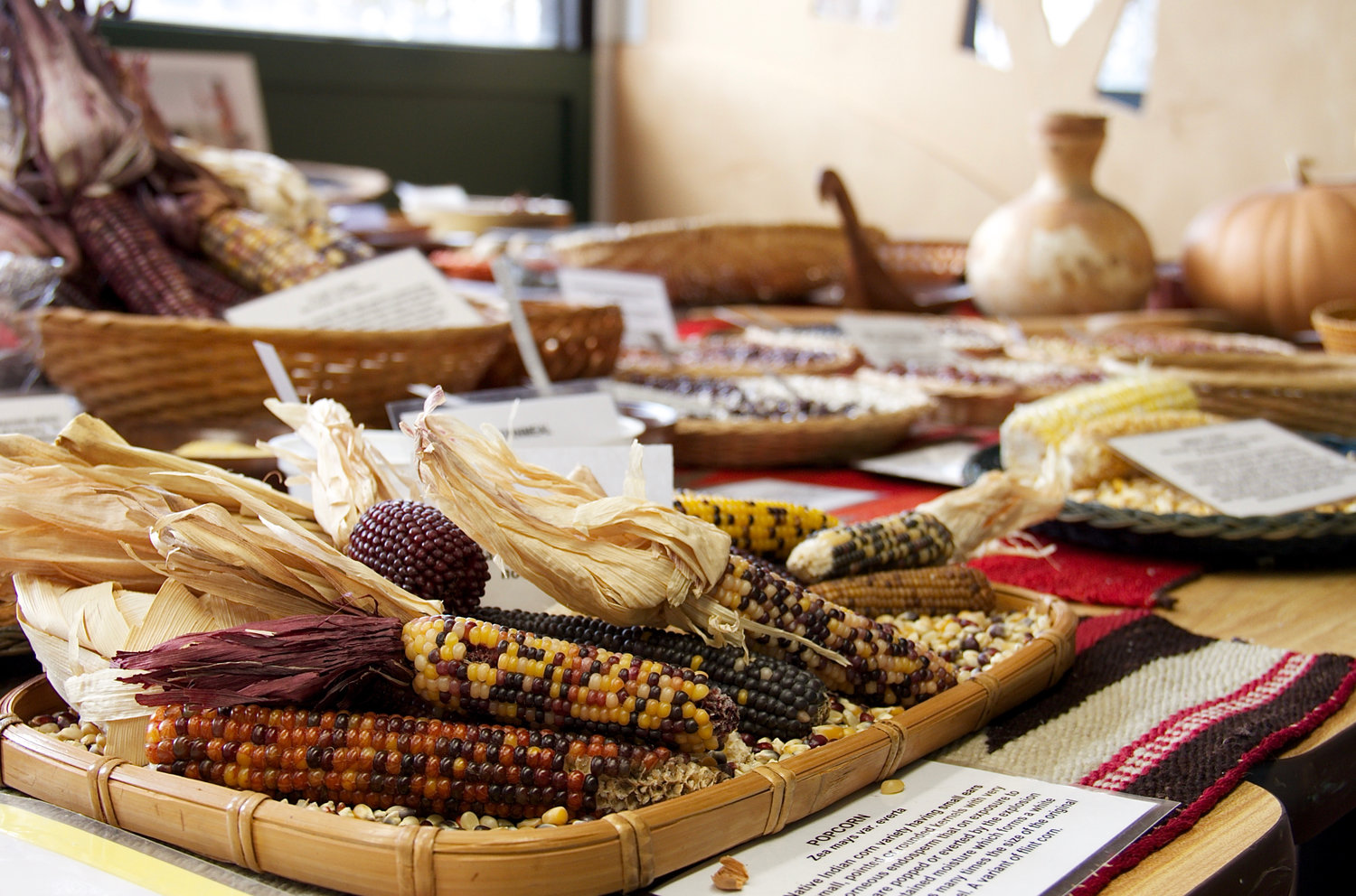 Different varieties of corn were on display at Garvies Point Museum for the Native American Feast.
