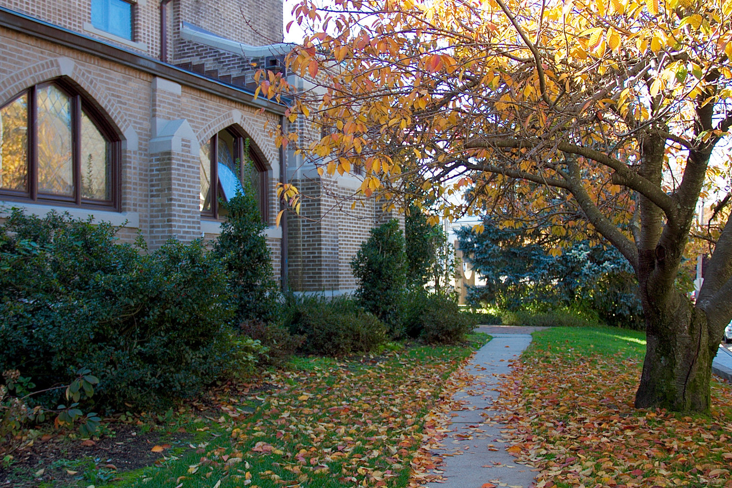 The sidewalks in Sea Cliff are rich with fall colors as the leaves fall to the ground.