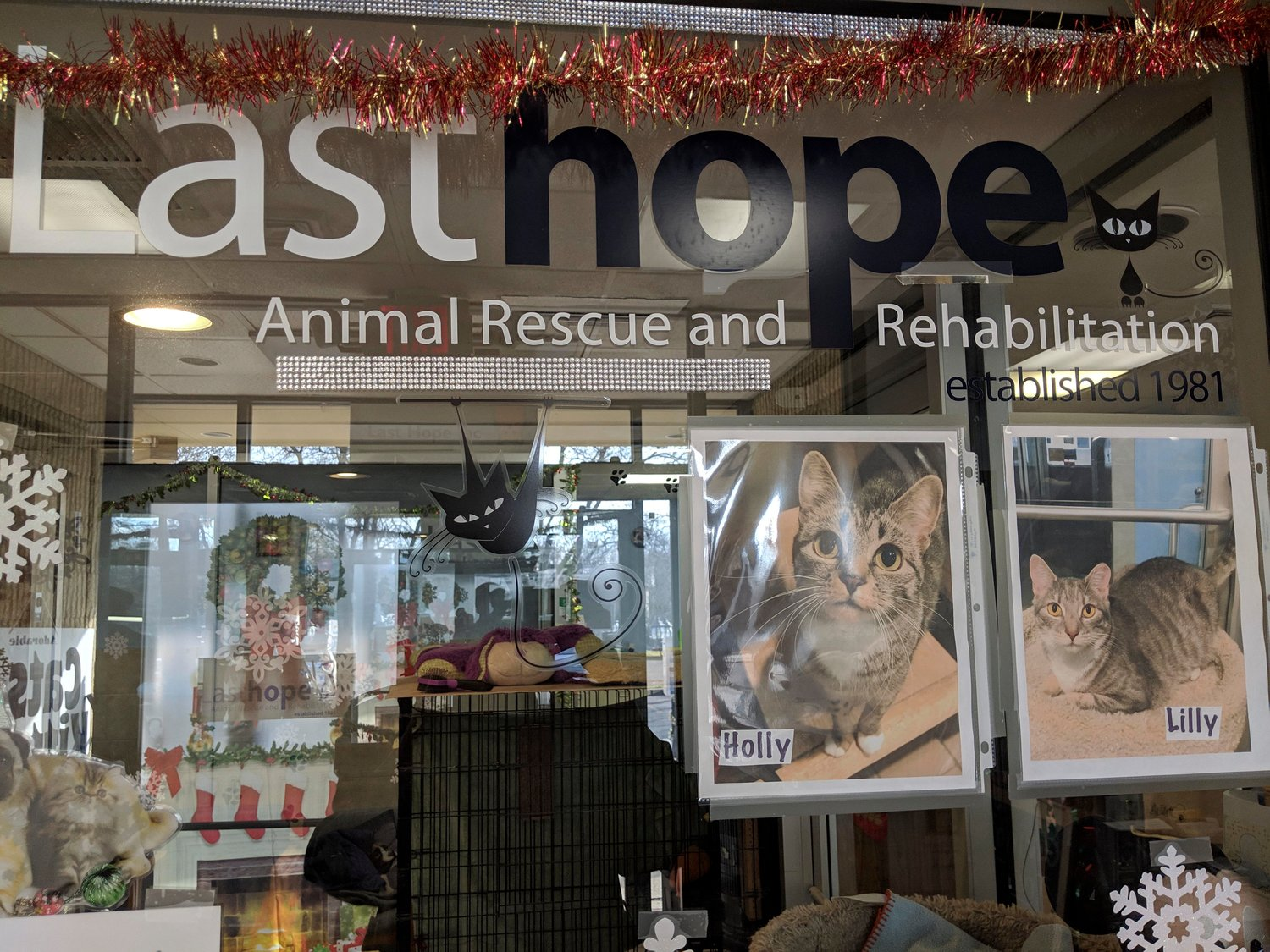 Last Hope Animal Rescue in Wantagh is in its 38th year.