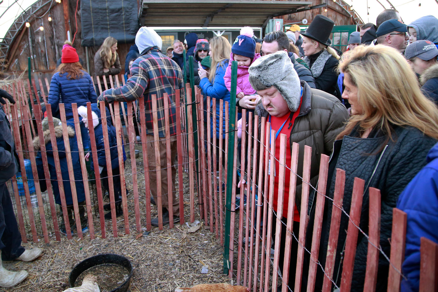 Tommy Spitaleri, along with several other residents, checked out  the animals in the petting zoo.