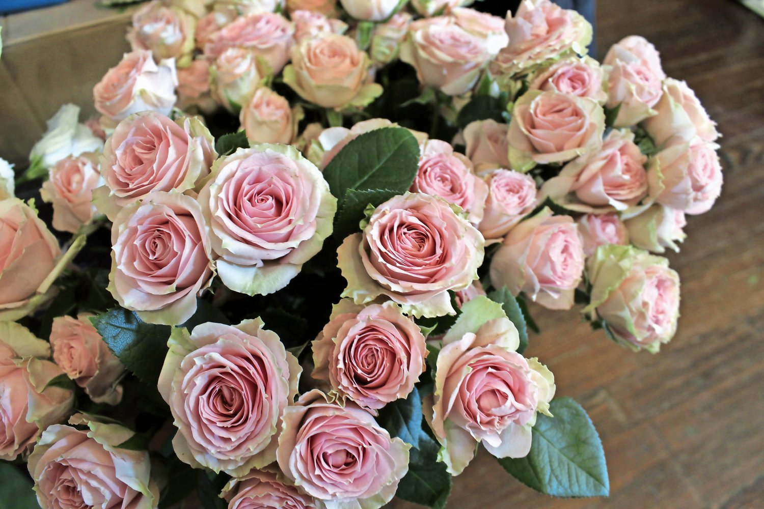 Baby pink petals make for the perfect romantic gesture.