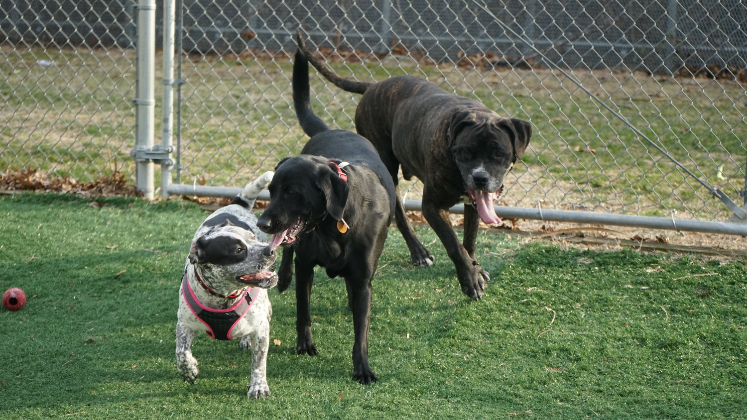 Margo, Bella and Blaze shared a playful moment.