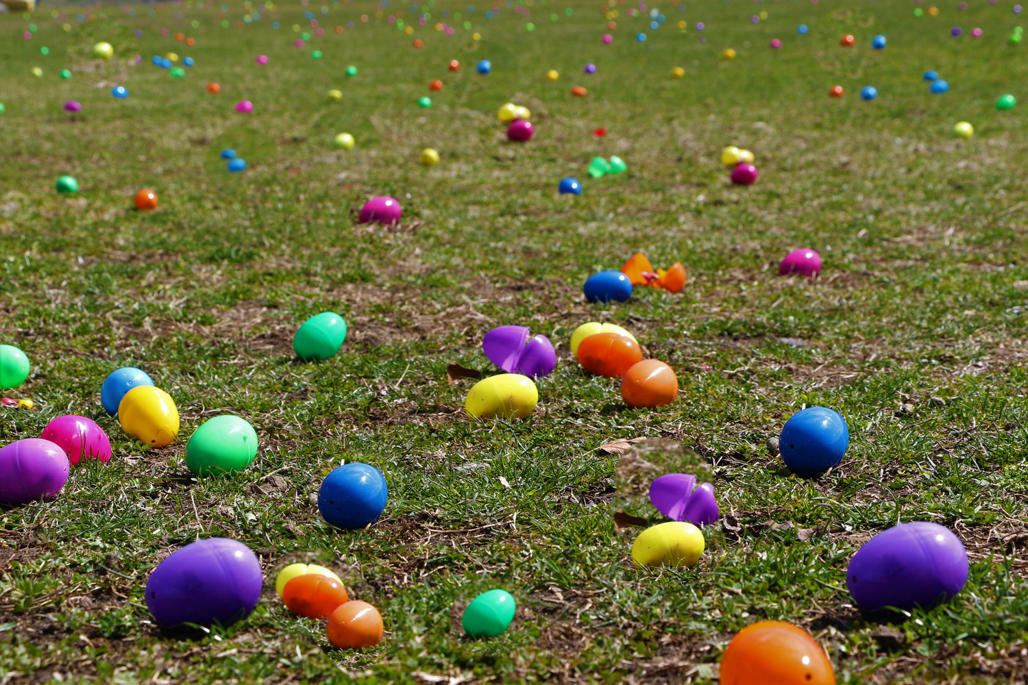 The Easter eggs were spread out for children to collect.