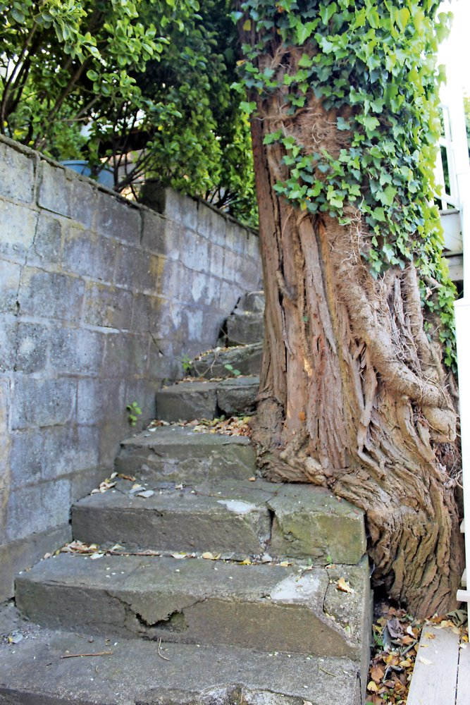 The trunk of a tree grows around one of the older stairwells.