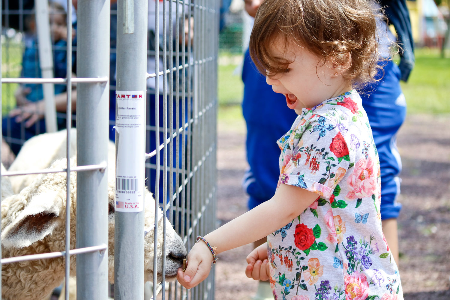 The petting zoo attracted many children, including Abby Assor 2 ½, who fed one of the sheep.