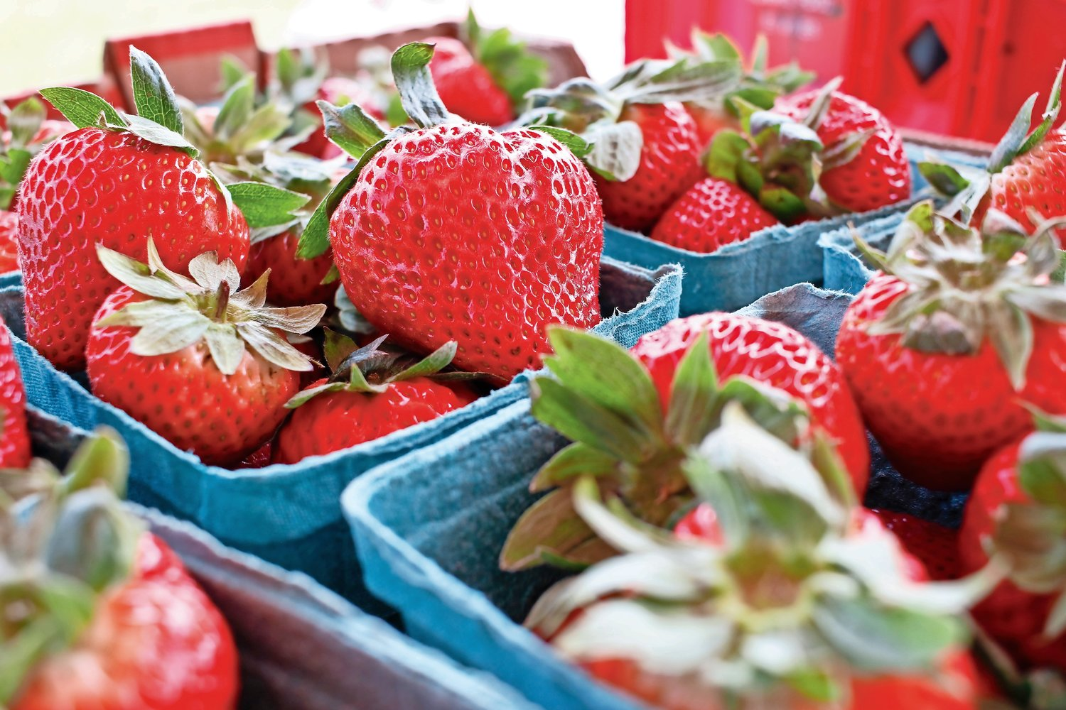 Vibrant and fresh strawberries are always offered in abundance at the annual Strawberry Festival.