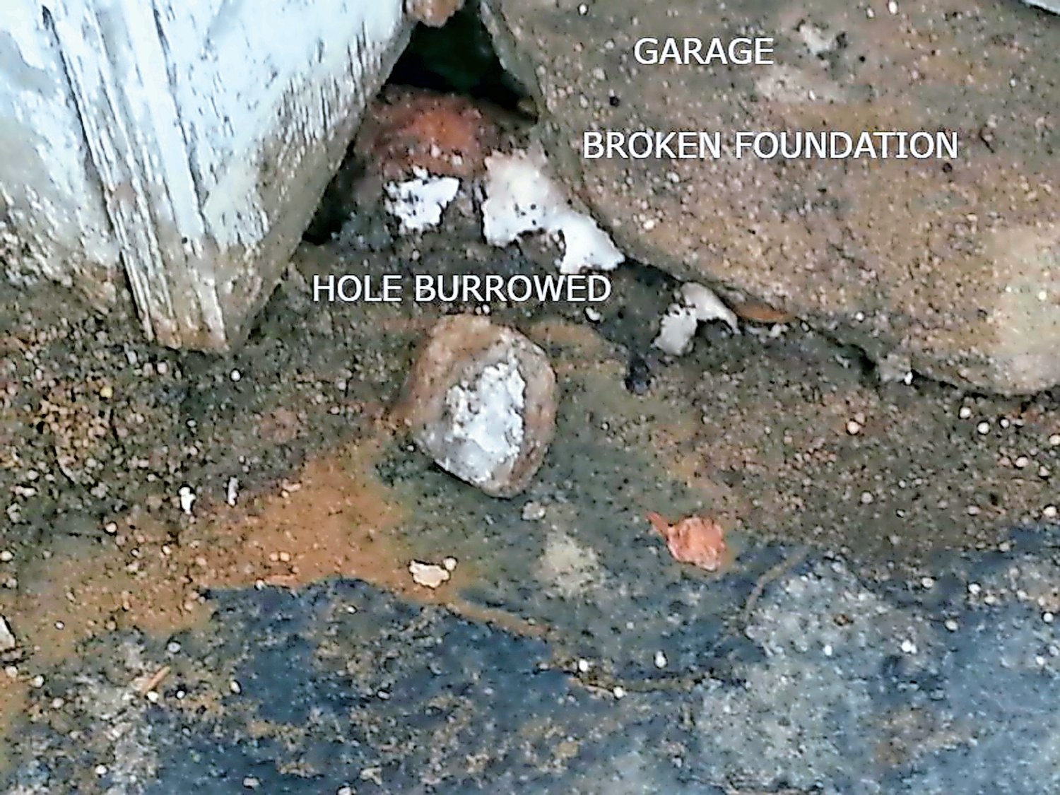 Valley Stream resident Linda Marlowe sent the Herald this photo, purportedly showing a hole rats burrowed on her property.