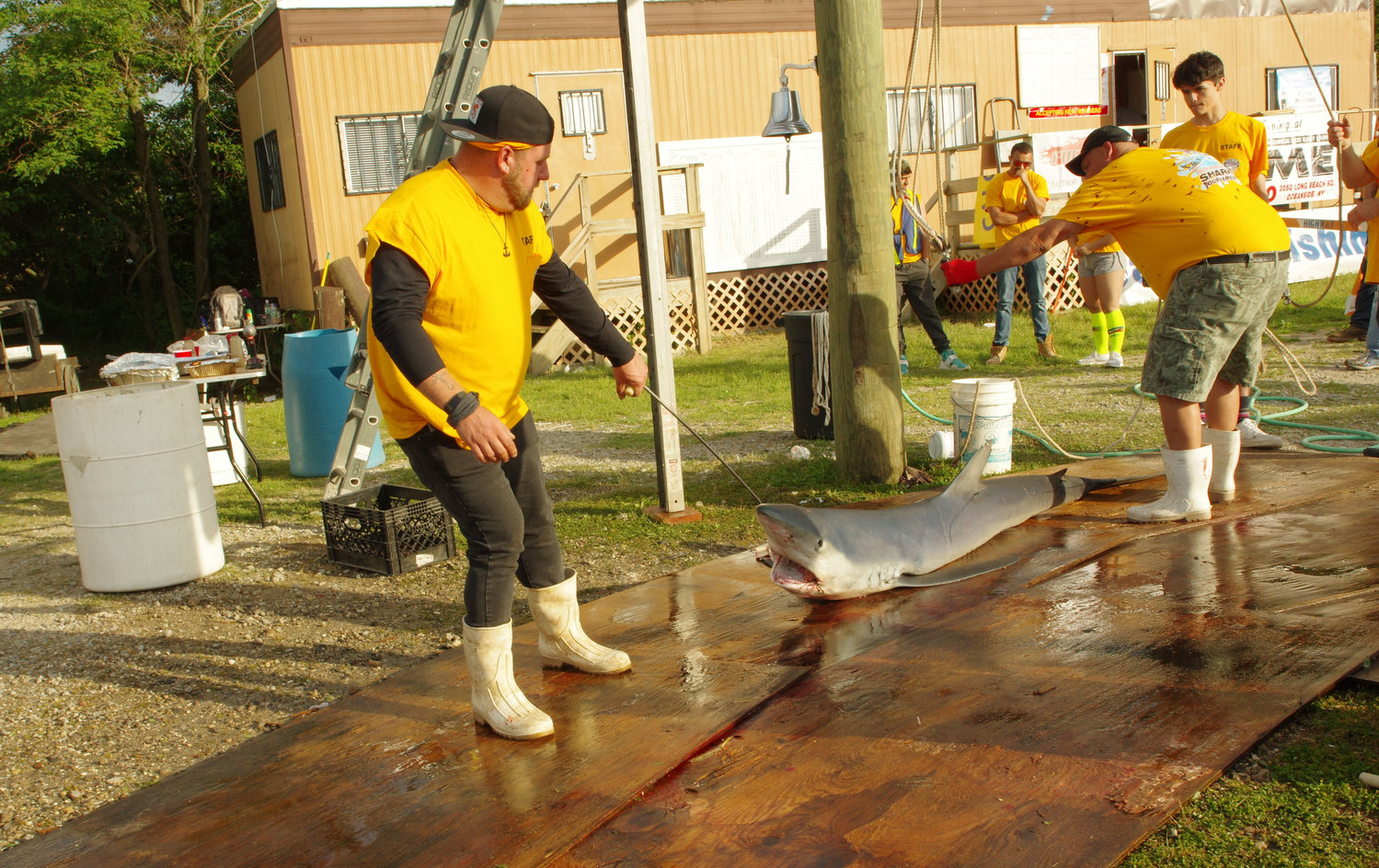 Each year, hundreds of fishermen and dozens of volunteers take part in the annual Freeport Hudson Anglers Shark Tournament at Guy Lombardo Marina. This year, the winning catch was a thresher shark that weighed in at nearly 300 pounds.