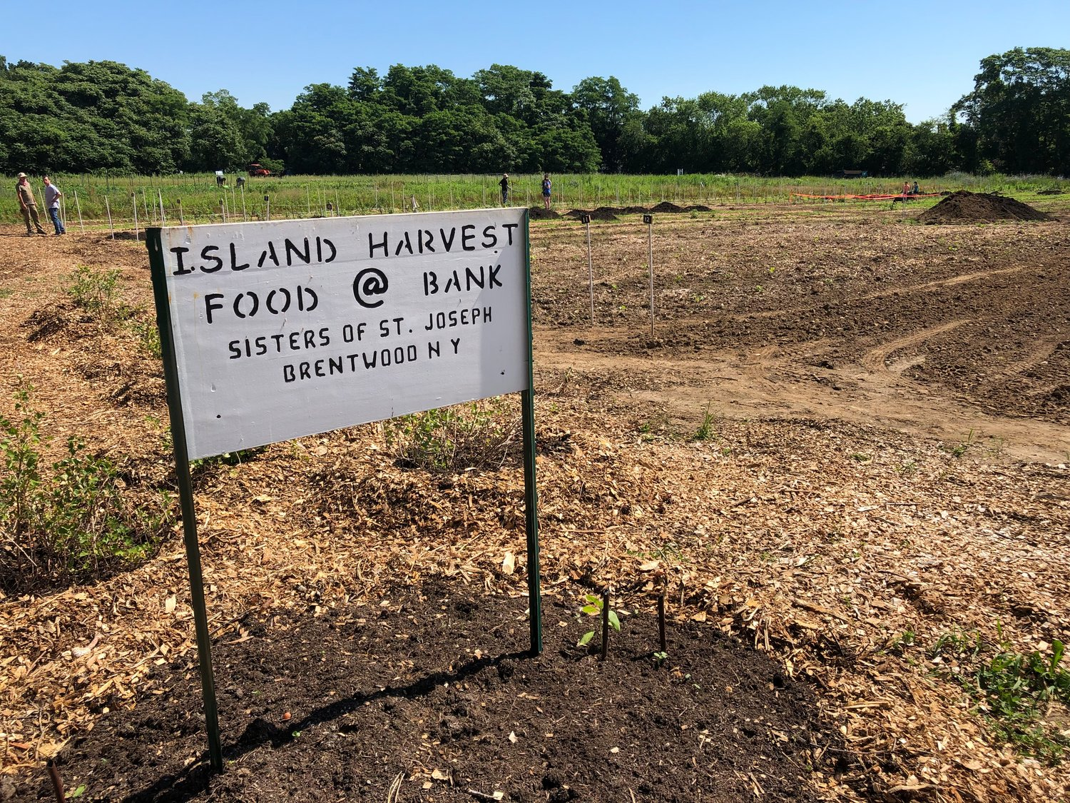 The Island Harvest farm grows an array of vegetables and helps produce between  6,000-8,000 pounds of farm-fresh produce per season.