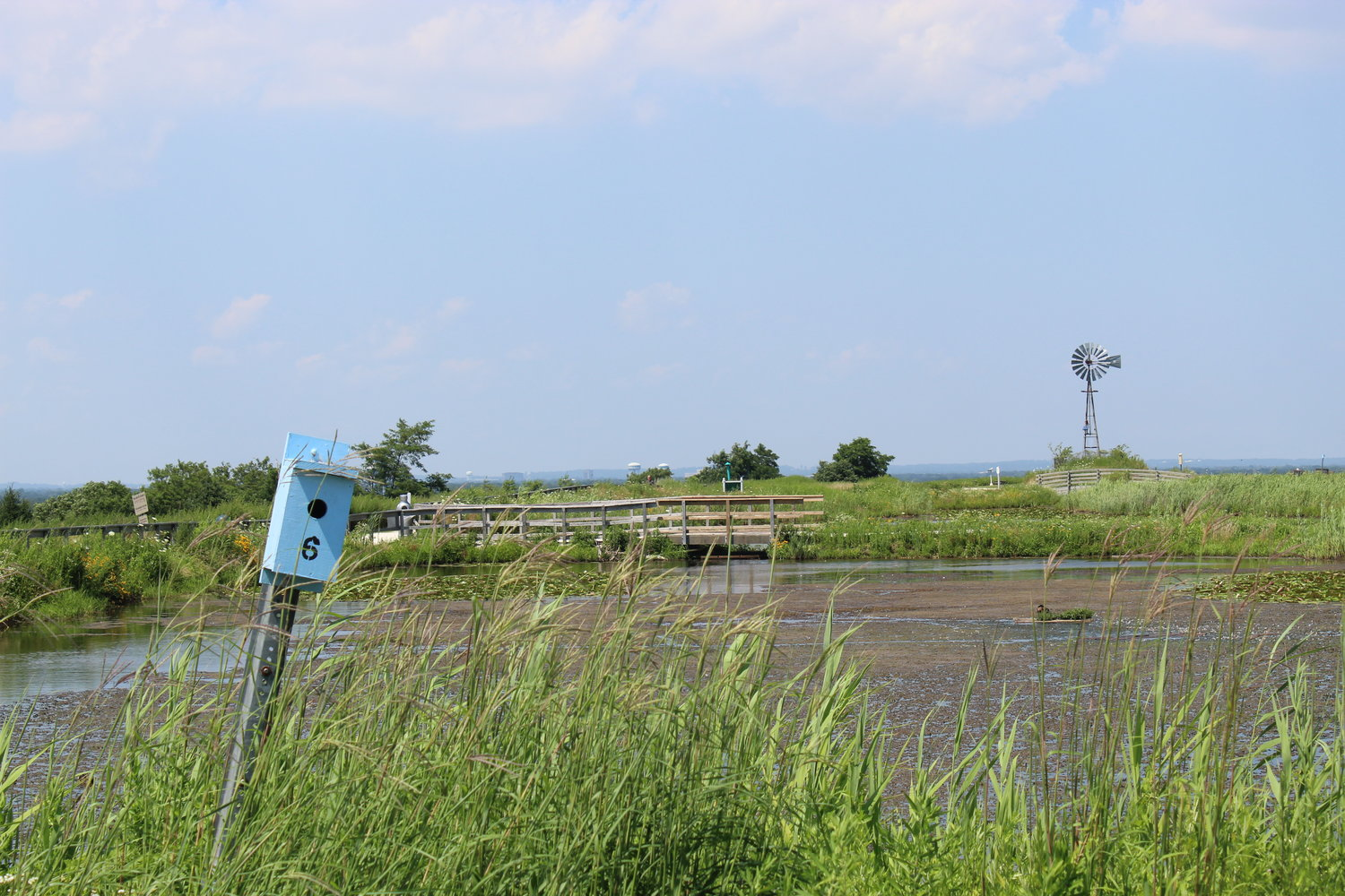 The preserve's seminal windmill could be seen in the background from the south side of the pond.
