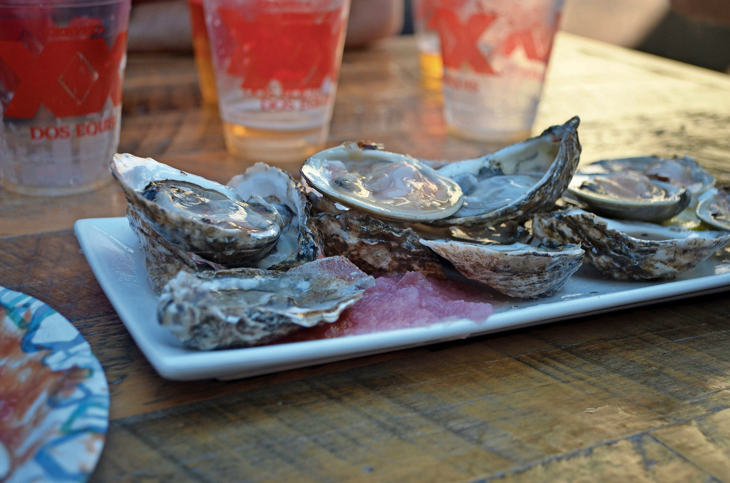 All the oysters featured at the festival will come from local waters, like these mollusks, which came from the Peconic Gold Oysters farm in the Great Peconic Bay and the Lucky 13 farm in the Great South Bay area.