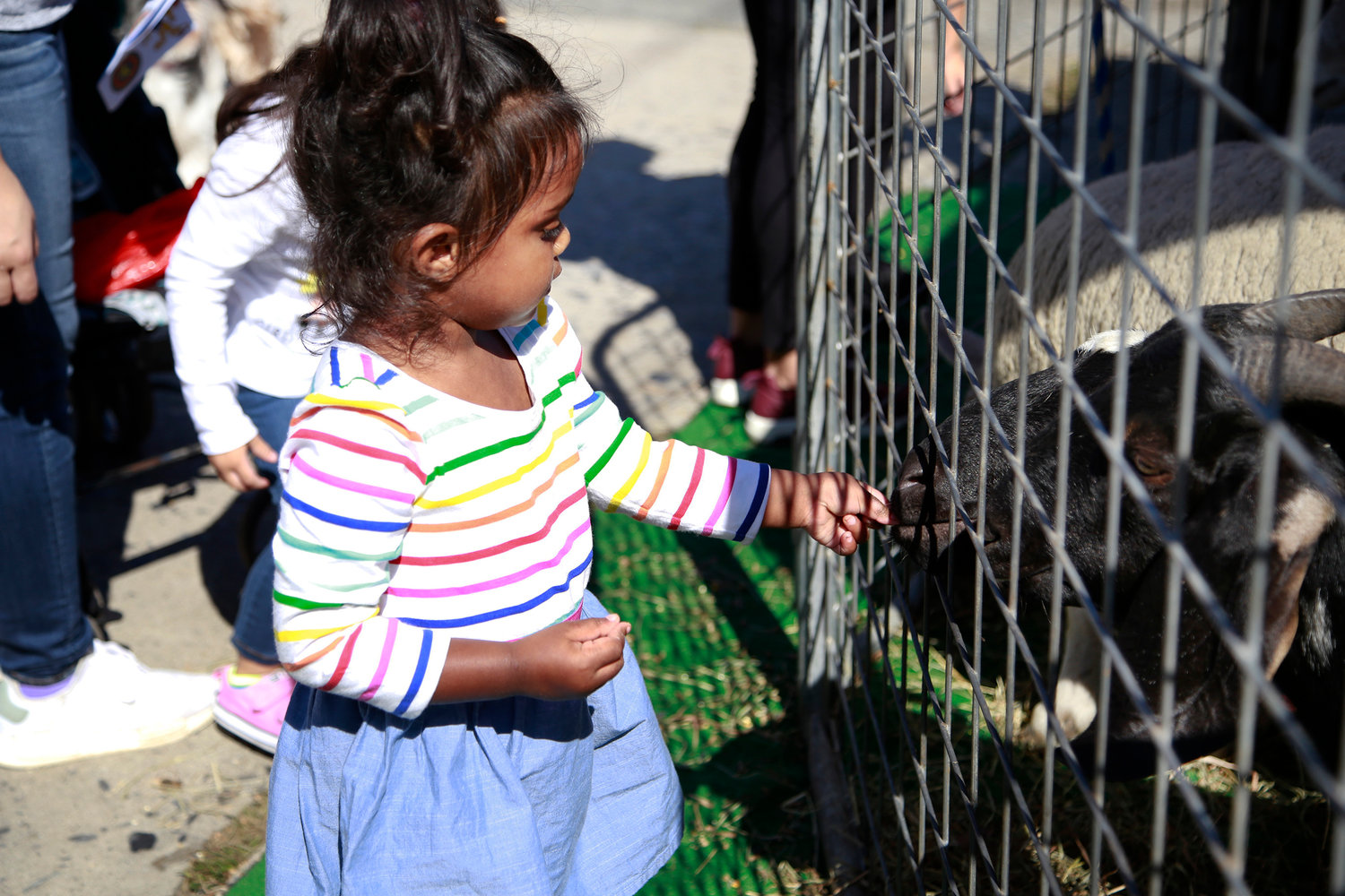 Two-year-old Lena Deodat fed a goat at 2018's Community Fest. The event promises to draw thousands.