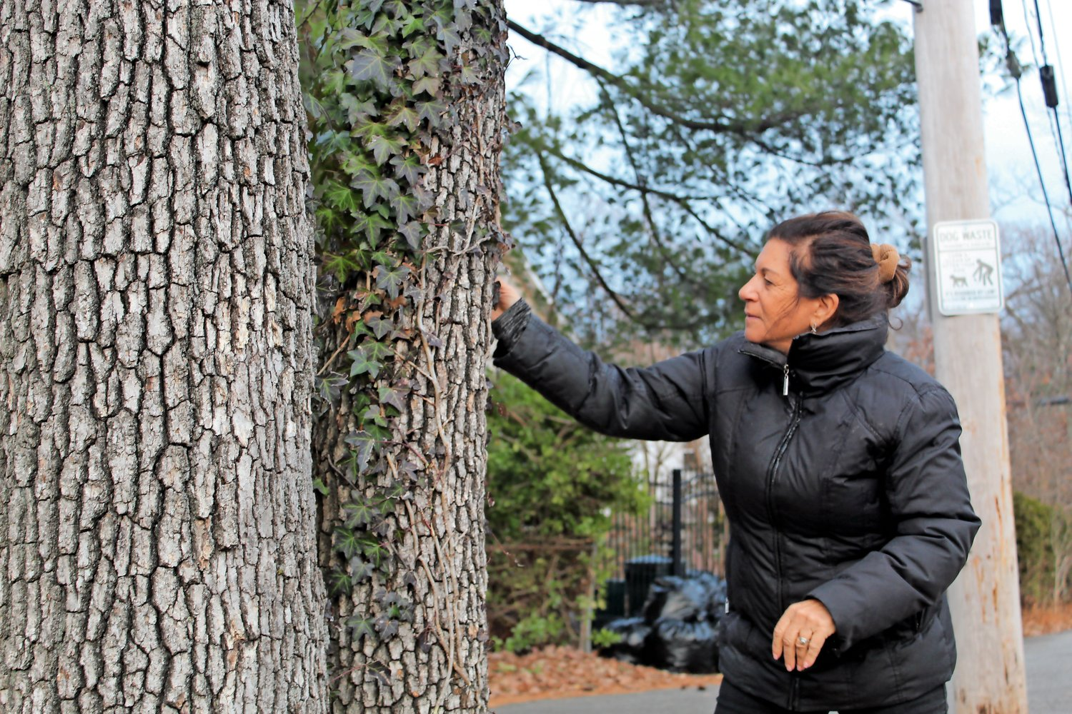 Marcia DiTieri, of Merrick, removed vines of invasive ivy from a tree in the hamlet's Tiny Town neighborhood. She is alarmed by the rate of tree removals in the area, and has advocated for a local law that would require residents to file a permit with the Town of Hempstead's Building Department before taking down trees on private property.