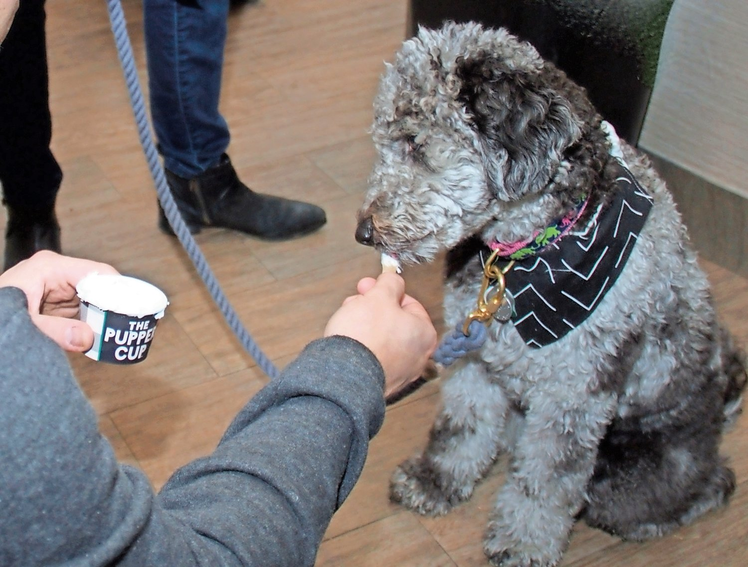 Mollie, a minnie golden doodle, liked the ice cream for dogs so much that she had a second helping.
