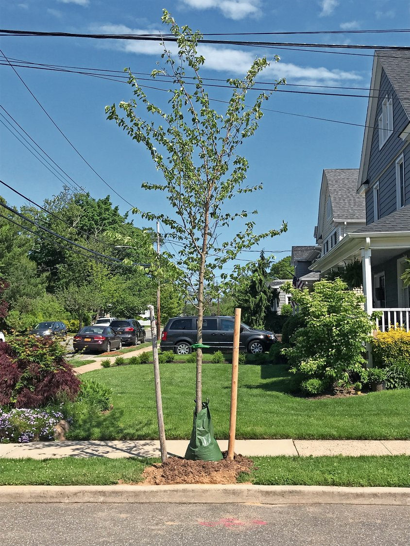 RVC Conservancy is taking orders for 10 different types of trees in the residential area of the village. Trees are $315 each, including a one-year replacement guarantee.