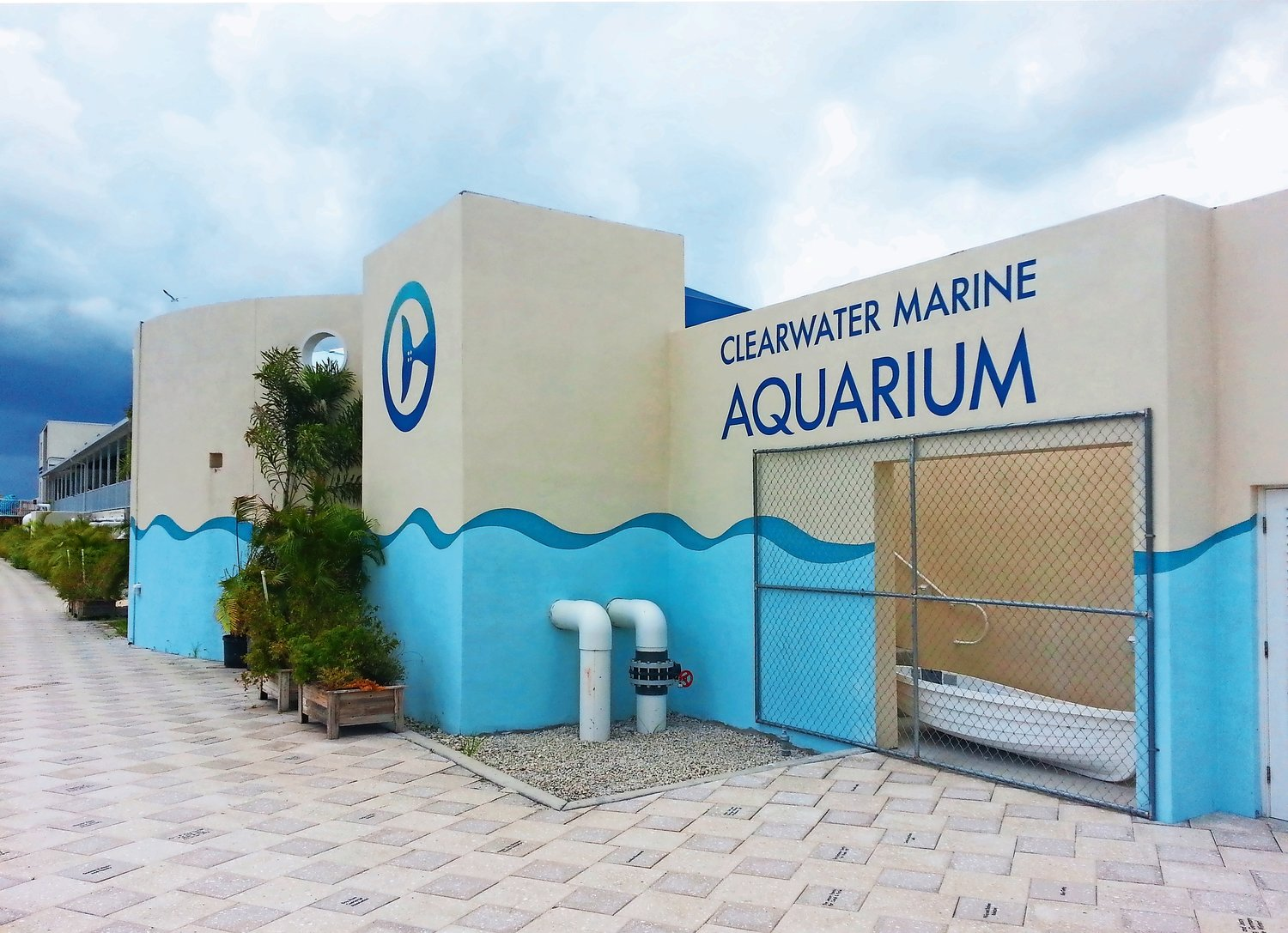 The Salk students researched different aquariums to donate to, including Clearwater.