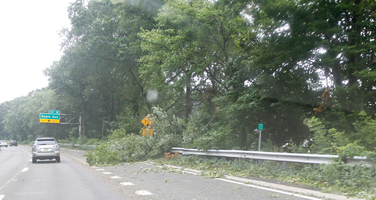 Trees covered the parkways, including this one at the Eagle Avenue exit on the Southern State Parkway in Lakeview.