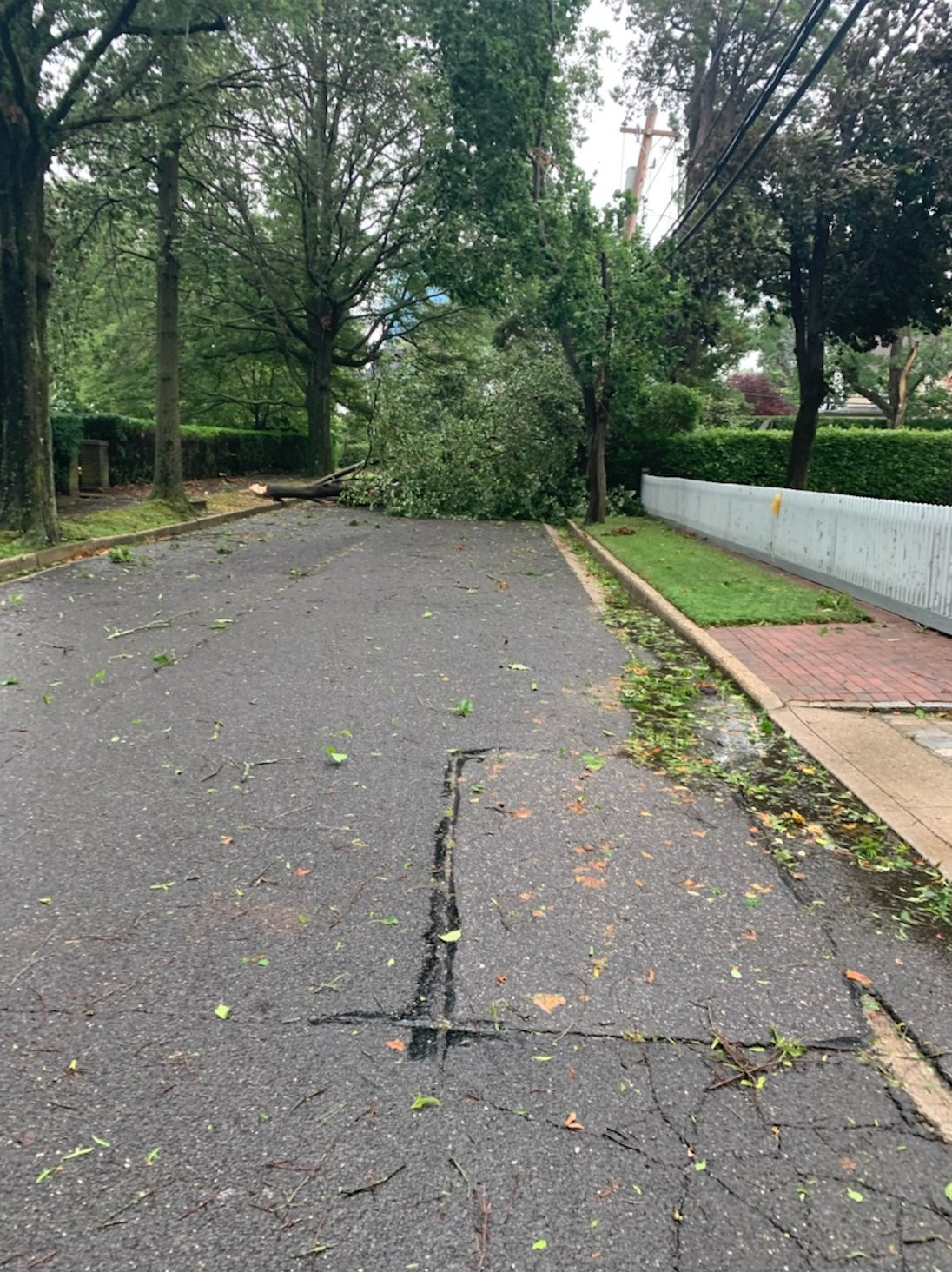 Sea Cliff Mayor Edward Lieberman watched a tree snap and fall into 8th Avenue near his home.