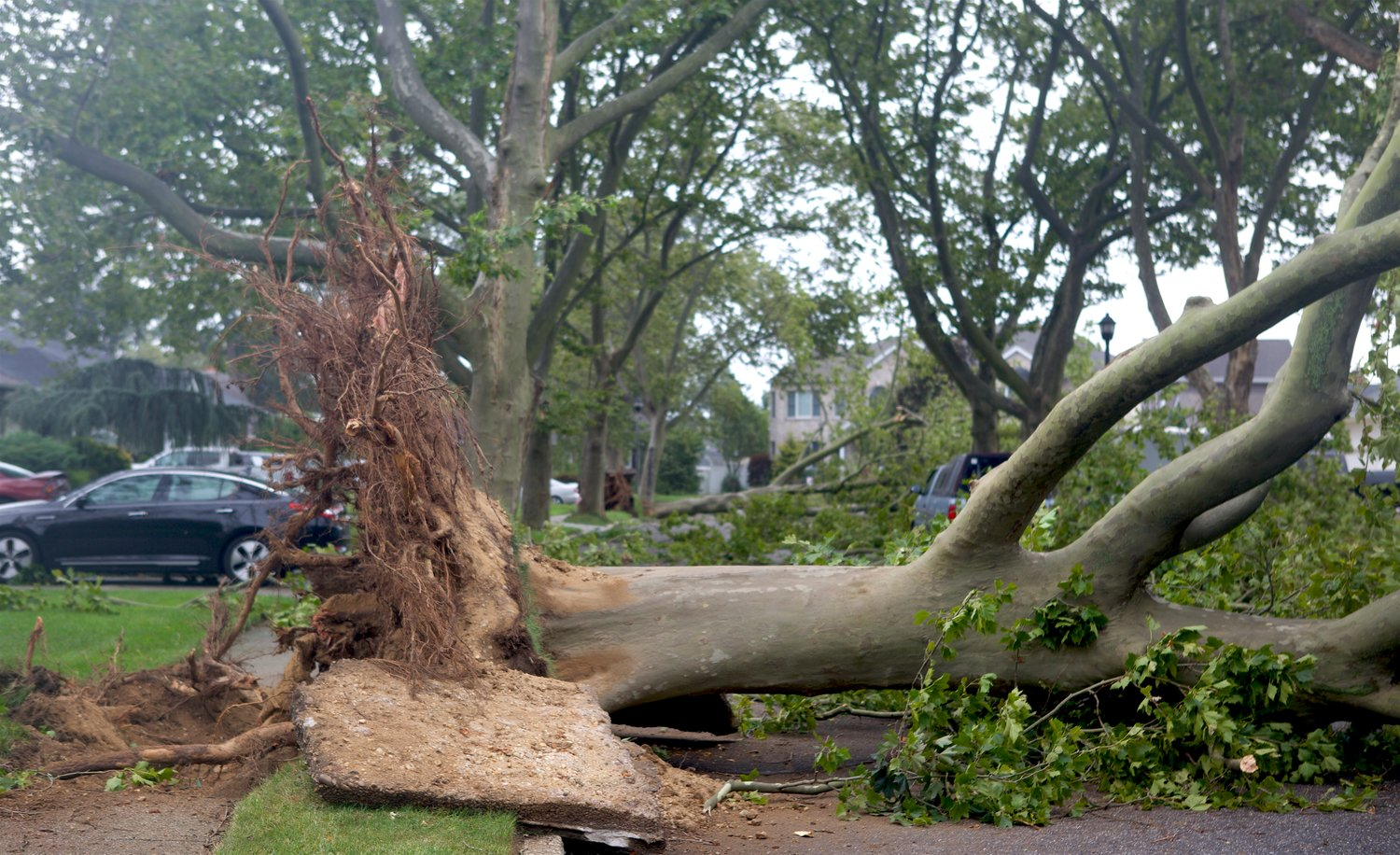 A tree was knocked down across the street on Duncan Court in Wantagh.