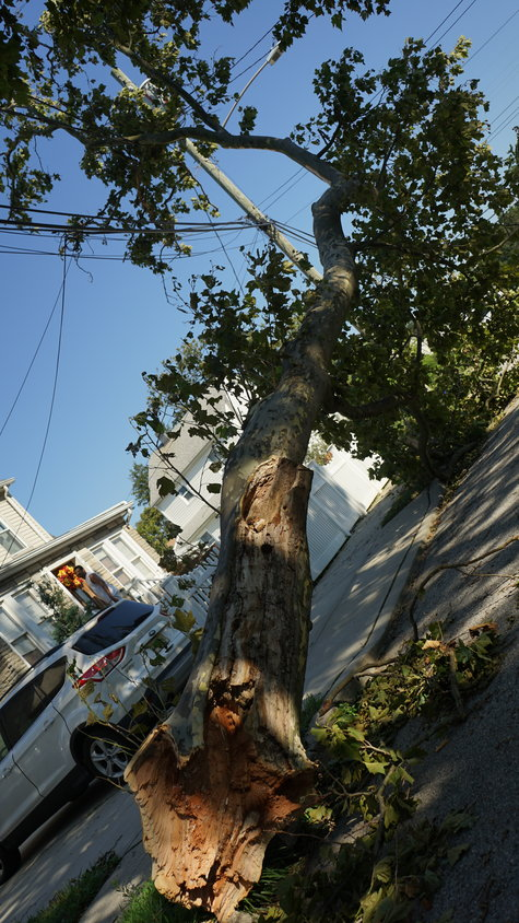 A tree remained entangled in power lines on Derby Street on Wednesday morning after Tropical Storm Isaias swept through the area the previous day.