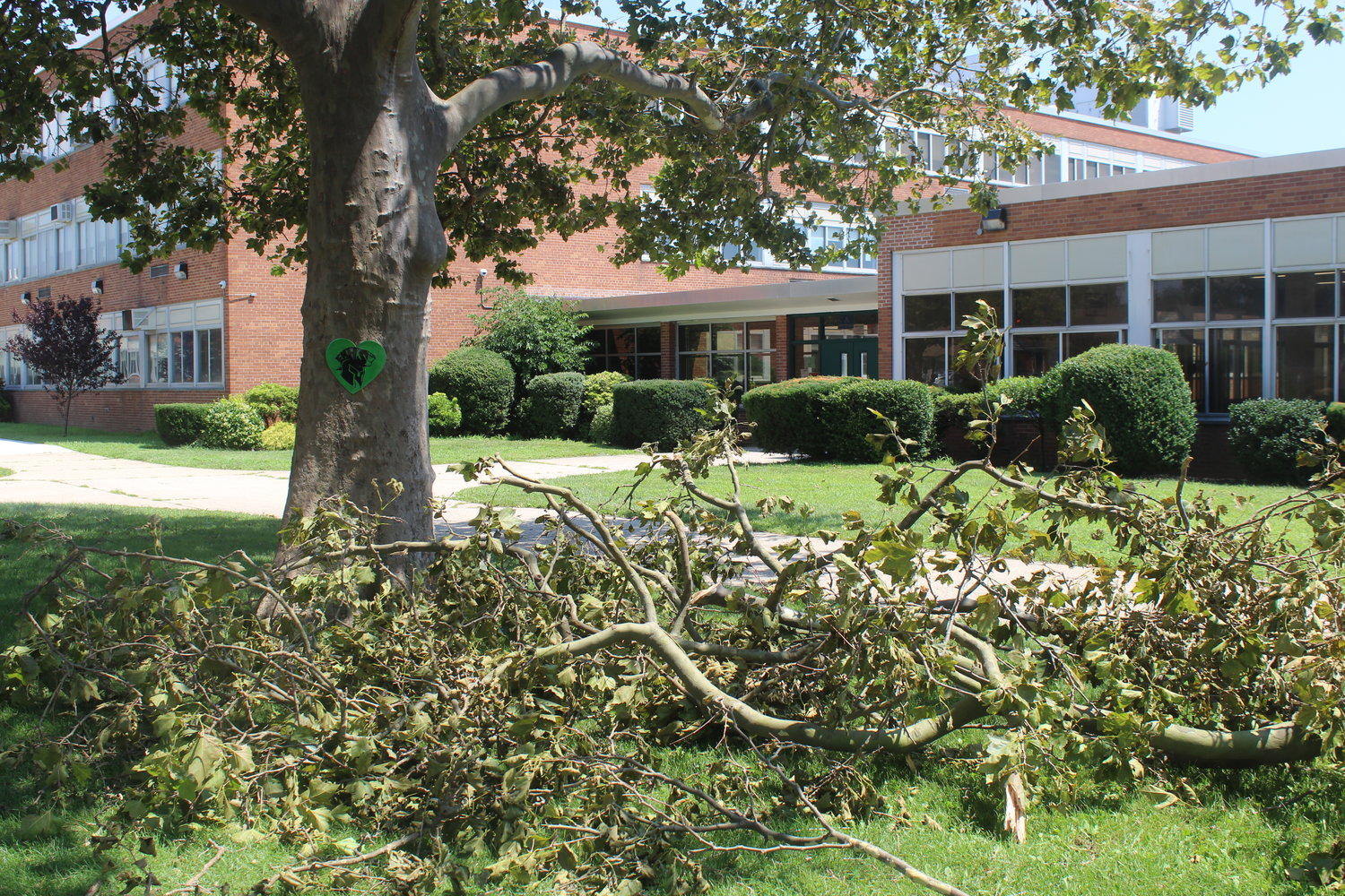 Limbs were down at Elmont Memorial High School.