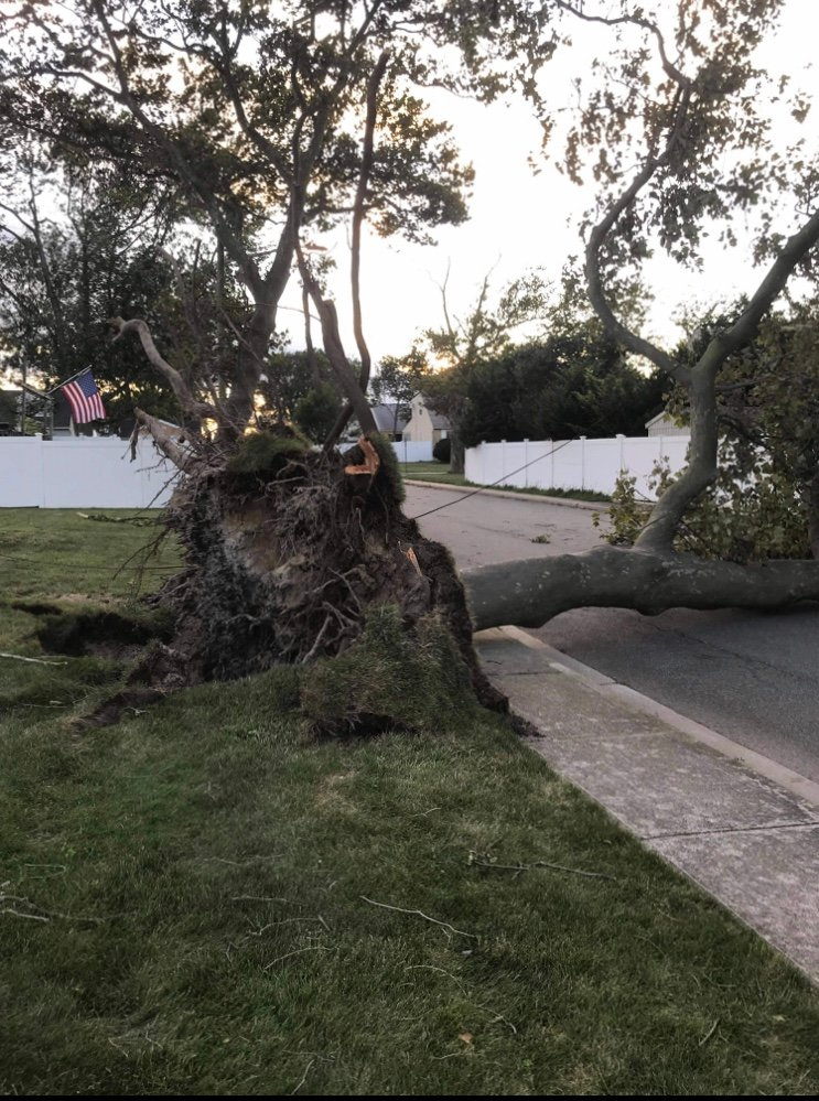 A tree fell onto the sidewalk and street in Harbor Isle.