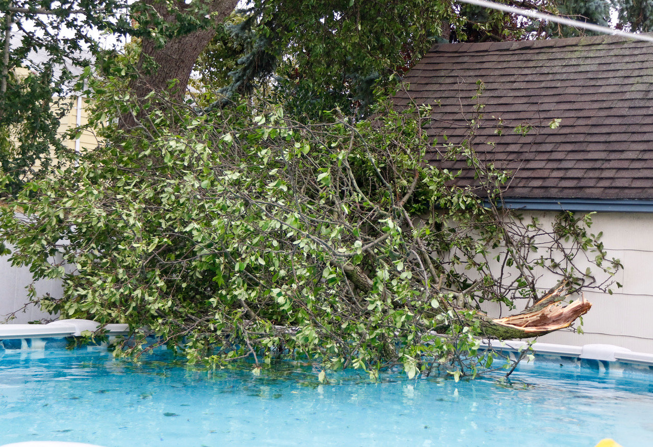 On Field Place, a neighbor's tree had cracked and fallen into a backyard pool.