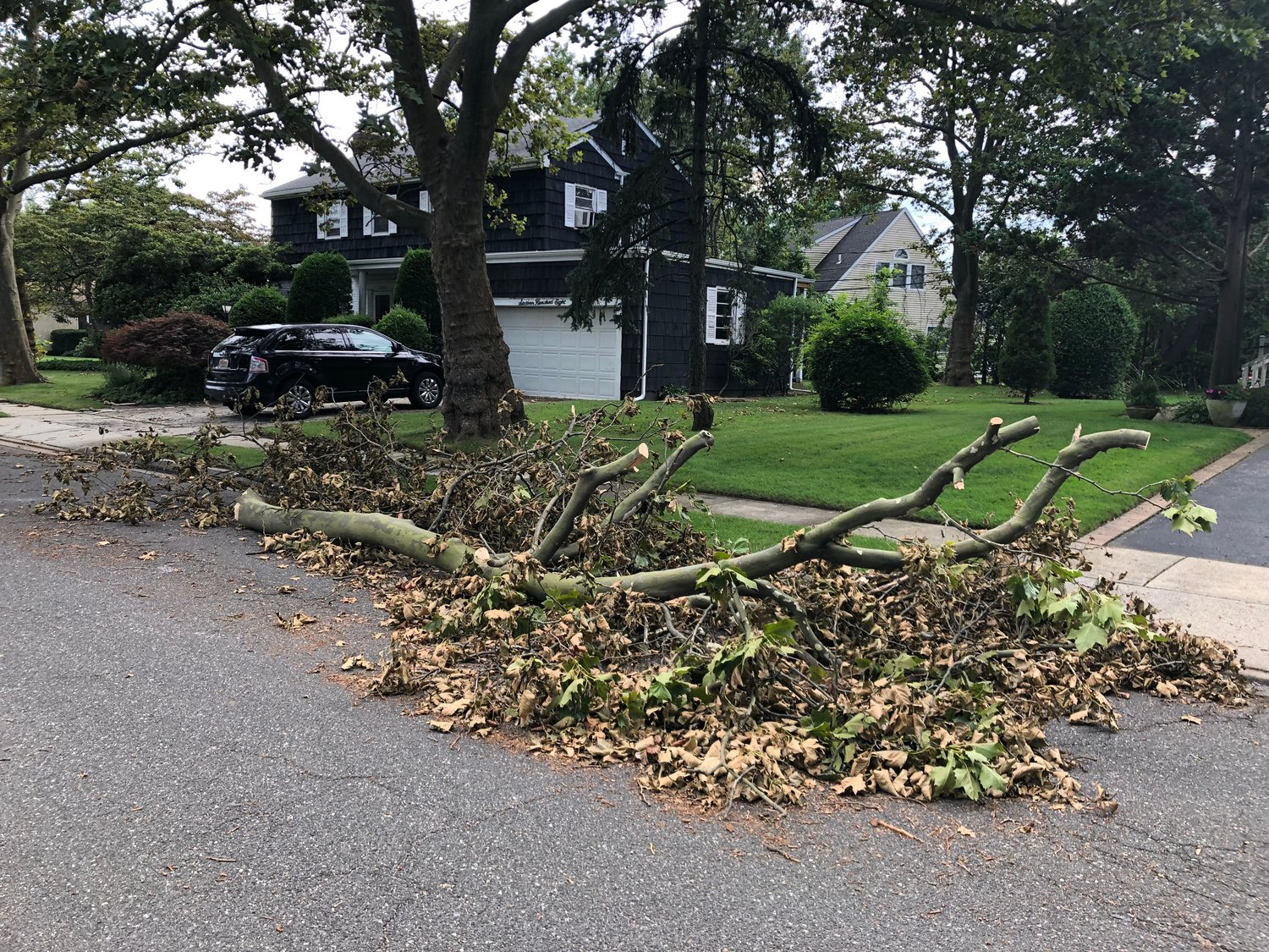 Many tree branches fell on Wilmot Drive in Lynbrook.