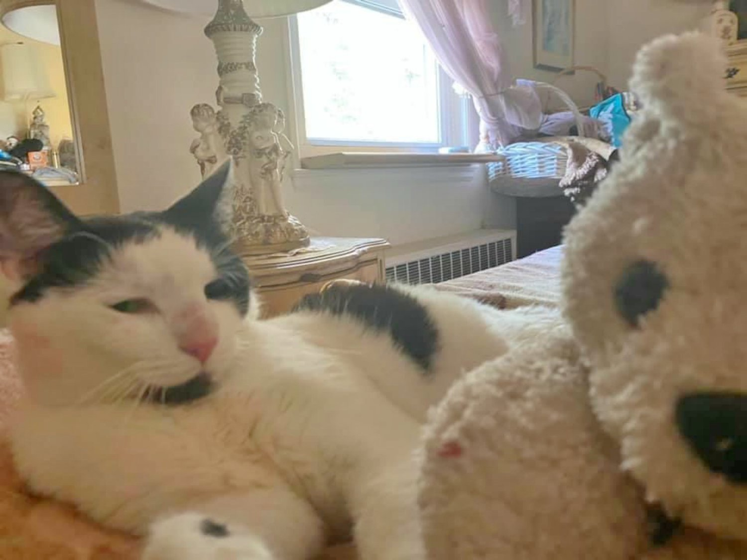 Pebbles the cat has returned home safely to her Glen Cove home after missing for five months.