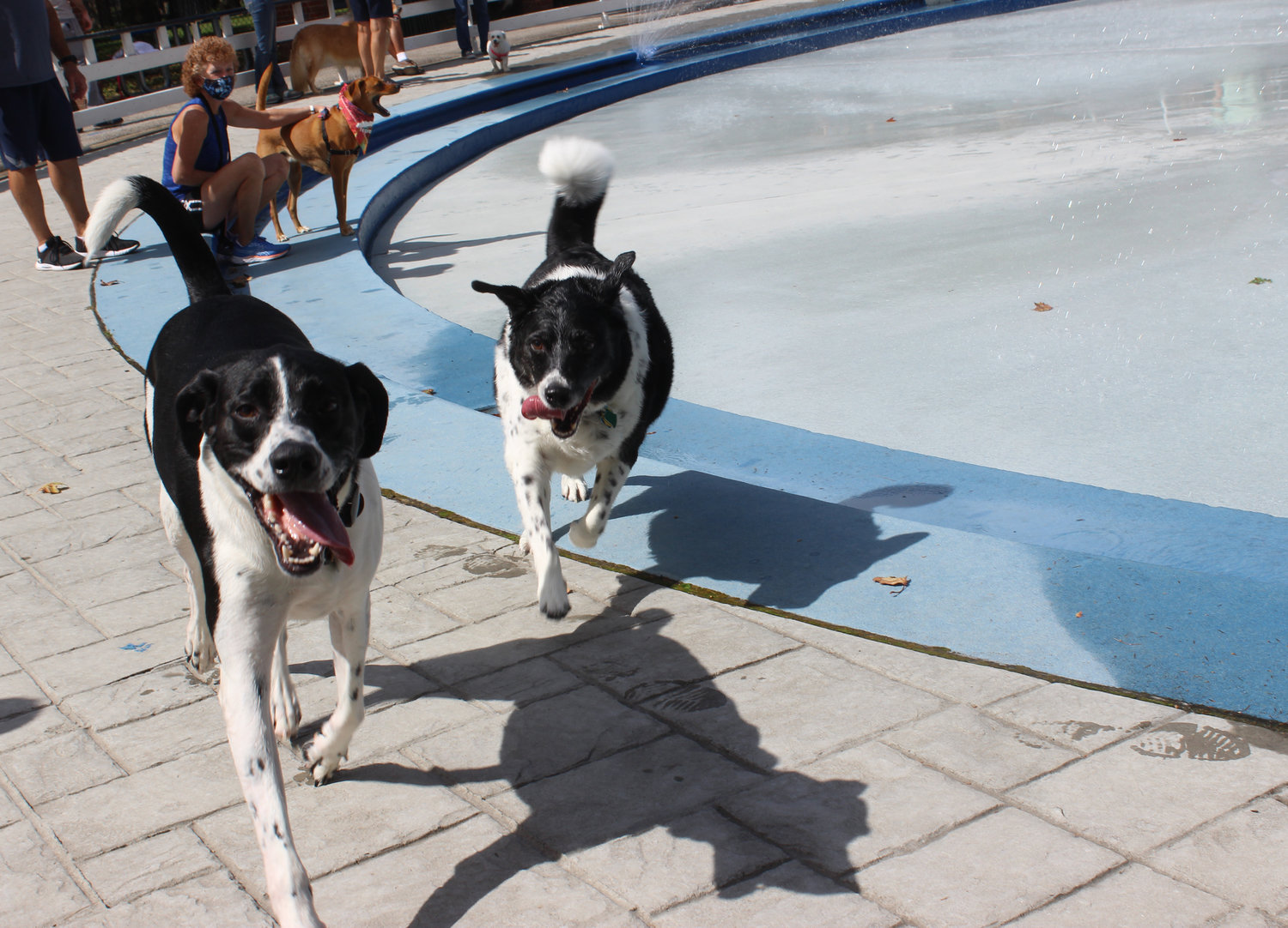 Dogs raced each other and played together during the county's first Water Bark, when three local splash parks were reserved for dogs and their owners.