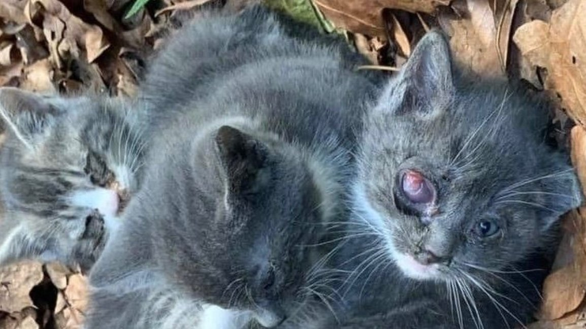 This image of feral kittens was part of an online petition begun by Renee Kraft, a Hempstead resident and animal advocate, calling on the Town of Hempstead Board to reinstate its trap-neuter-return program at the town's animal shelter in Wantagh.