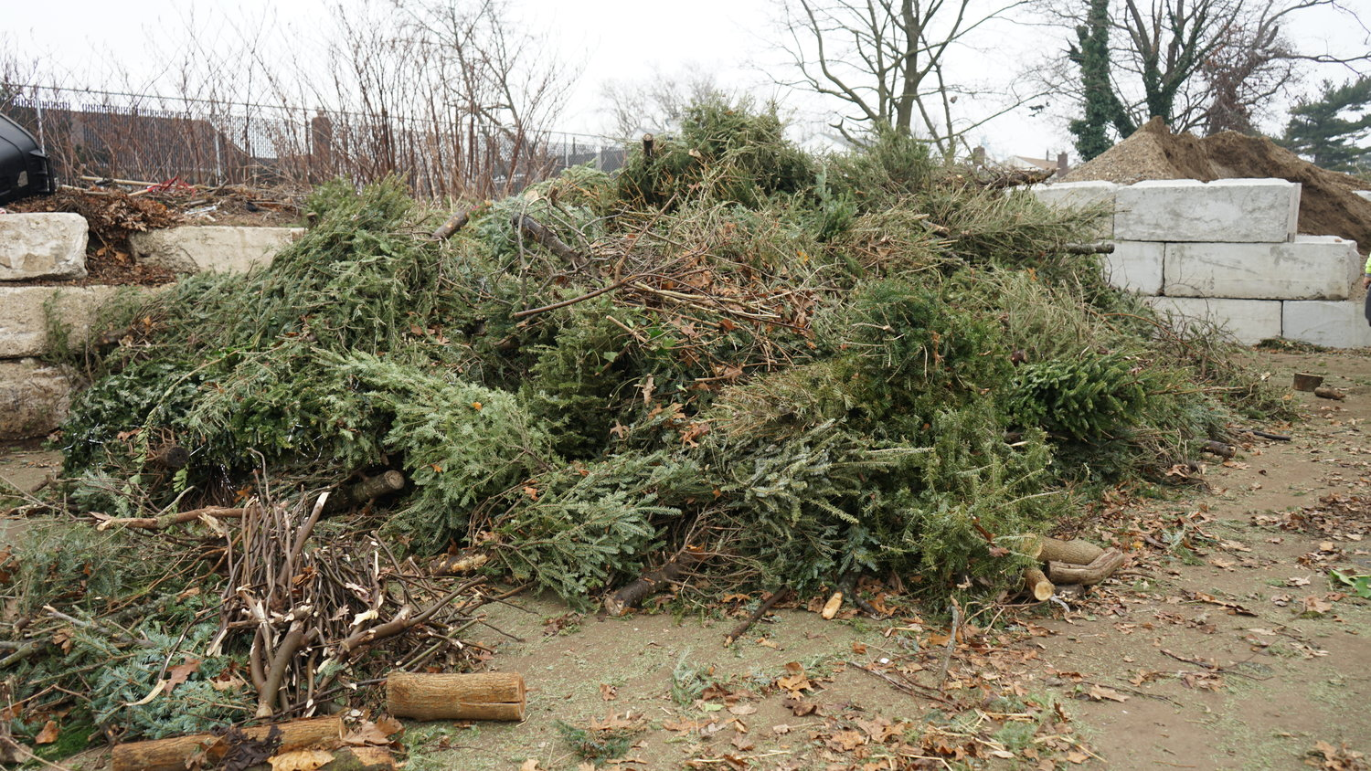 A pile of roughly 700 discarded Christmas trees. Normally they are hauled away at a cost.