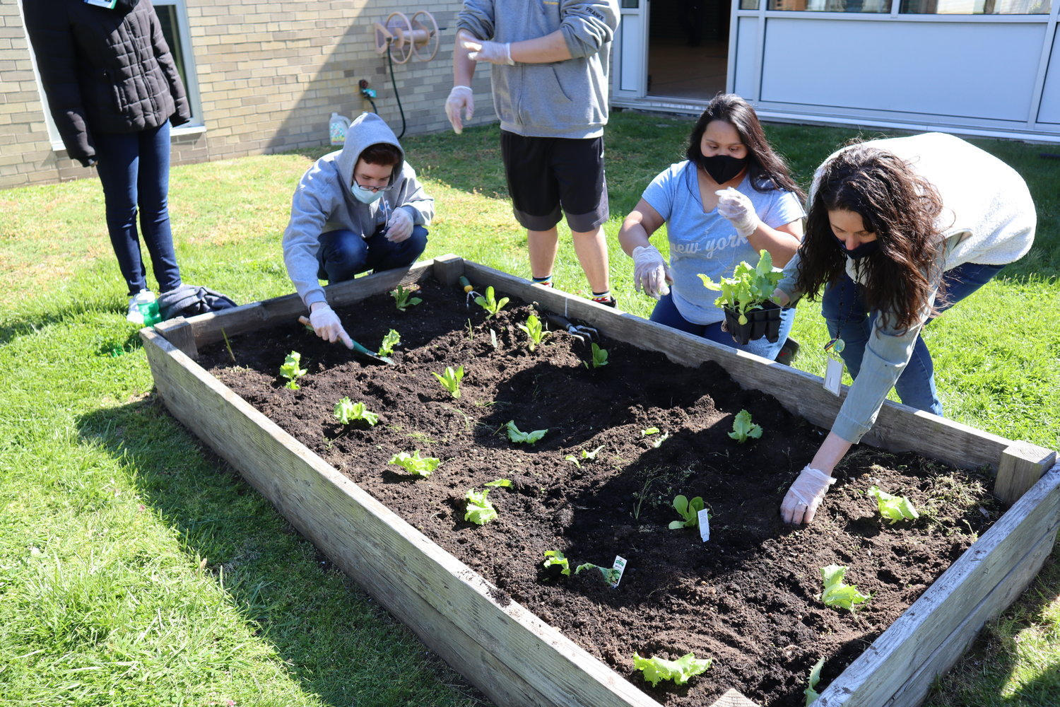 Students and advisors of the Meadowbrook Alternative Program in the Bellmore-Merrick Central High School District planted vegetables in the Brookside School courtyard on a sunny Thursday morning.