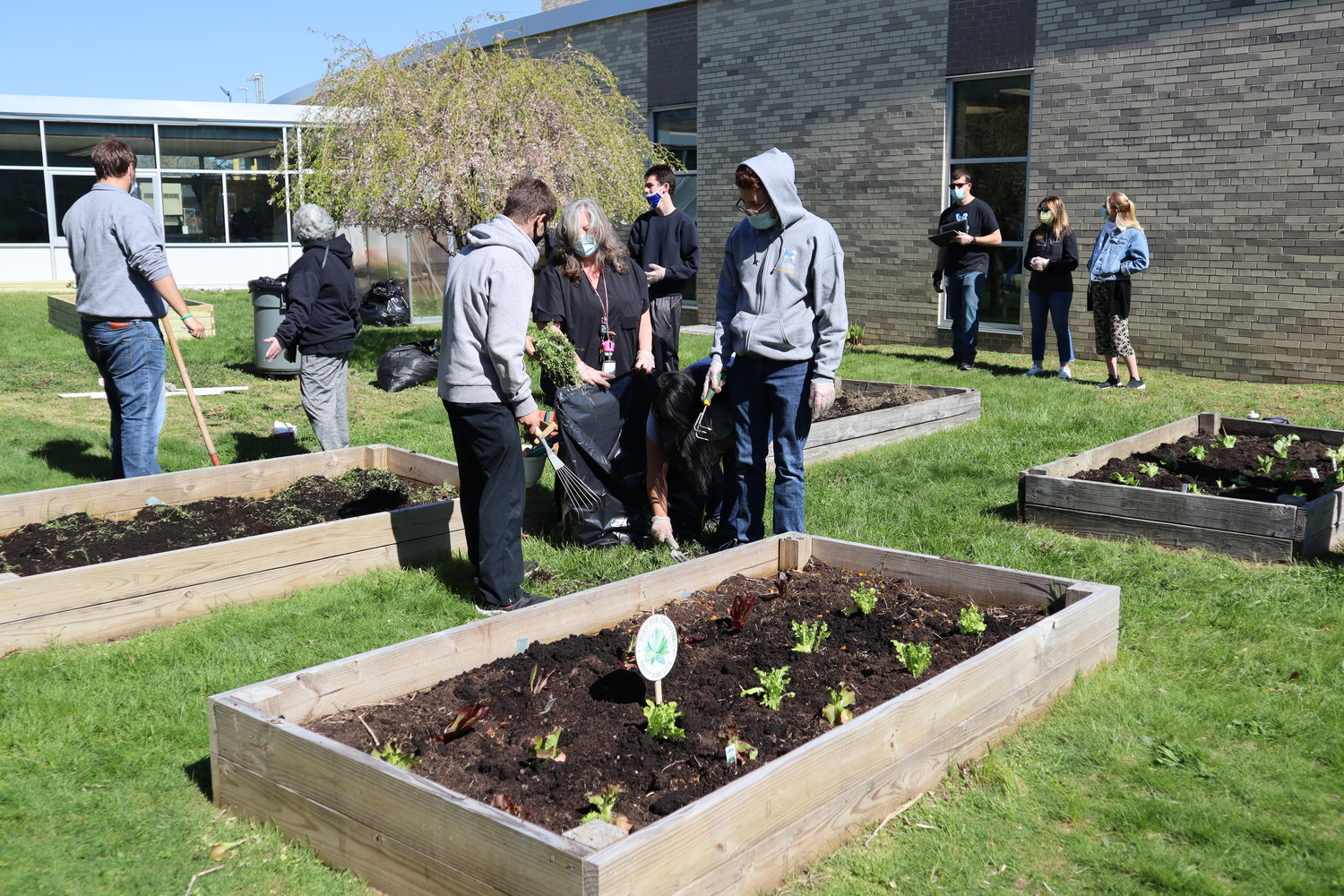 The garden boxes sit in the Brookside School courtyard, and its crops will eventually be harvested.