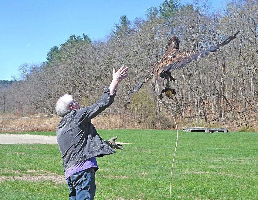 """TRR photos by Scott Rando  Bill Streeter """"tosses"""" the young eagle at the start of a test flight. Creance (tethered) flights are a last step before actual release; if an issue is noted, the bird can be retrieved rather than having a bird that may not be ready for release escape and then not survive."""