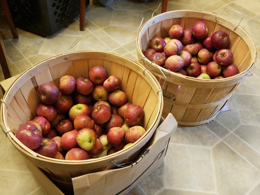 Two bushels of apples are plenty of work for the apple-cooking hobbyist.