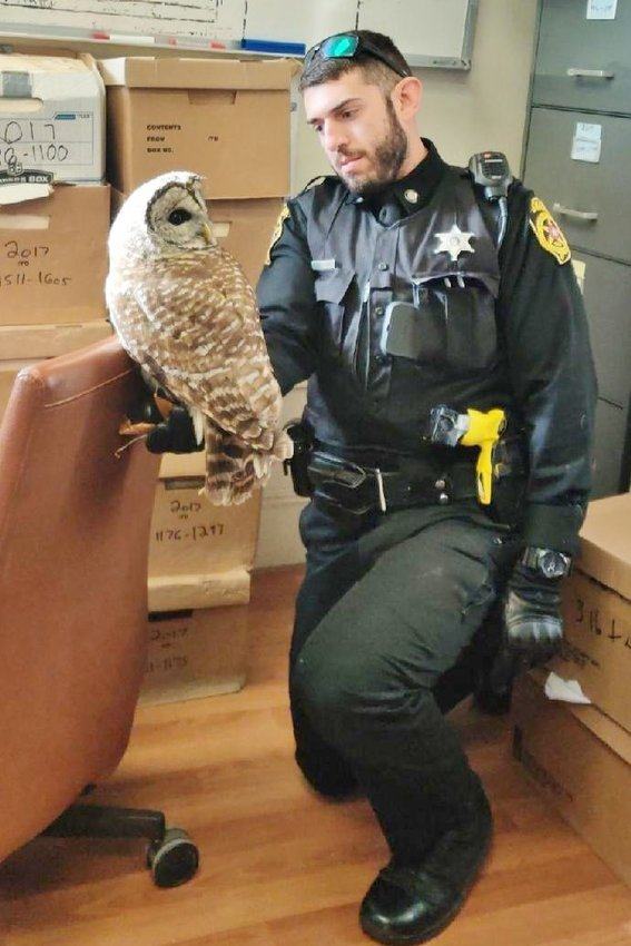 Deputy Sheriff Kyle Geraine holds a barred owl he rescued.