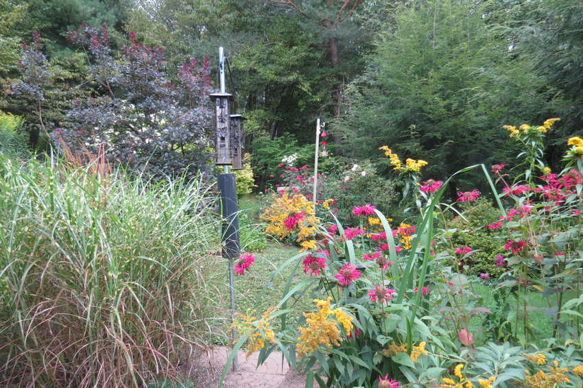 This garden is designed with birds in mind: a feeder surrounded by native plants like beebalm and goldenrod.