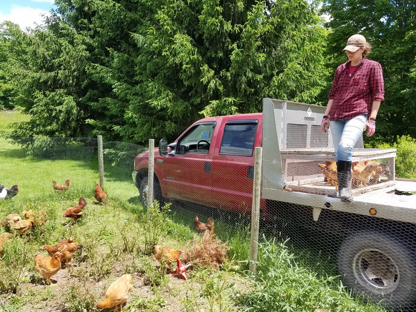 My wife Chelsea surveying our winged livestock as we load the truck to harvest our chickens.