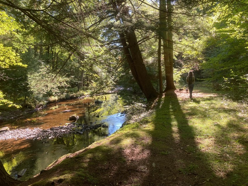 The simple act of taking a walk through the forest or along a sparkling waterway like this one in Pike County, PA can reduce anxiety and restore a sense of peace and perspective. Take a dog along and be inspired by its highly engaged sensory appreciation of the experience.