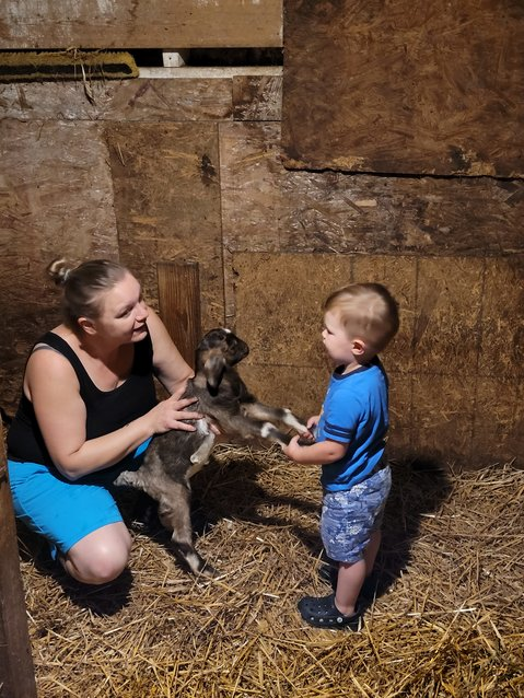 My son learns how to safely handle newborn baby goats from his grandma.