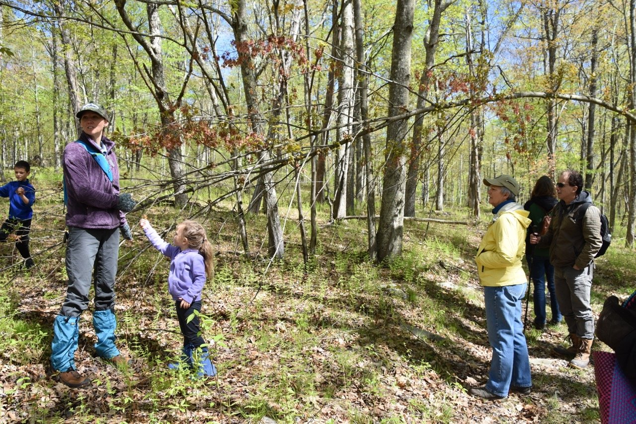 Amanda Subjin of the Delaware Highlands Conservancy, flanked by her children, Zebbin and Juniper, discusses the plight of a maple tree during the Native Plants and Photography Workshop held on May 10.