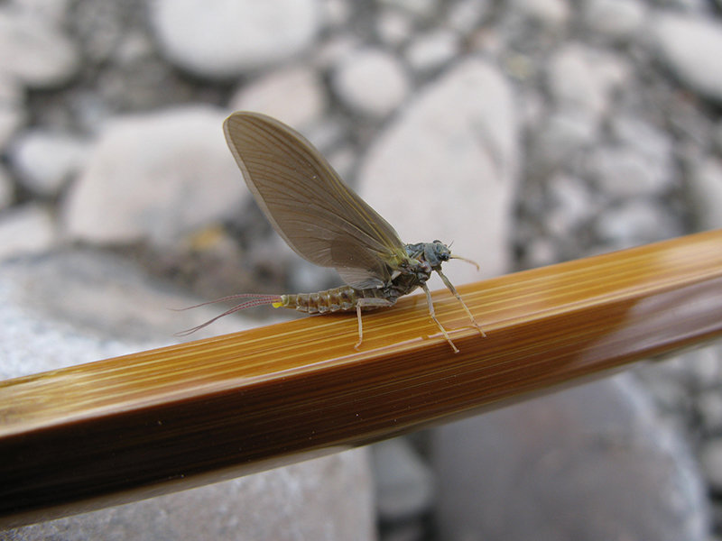 Photos provided by Tony Bonavist