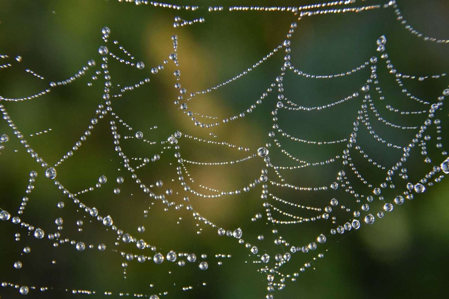 Dew collects on spider webs creating artful outlines of the web's delicate structure.