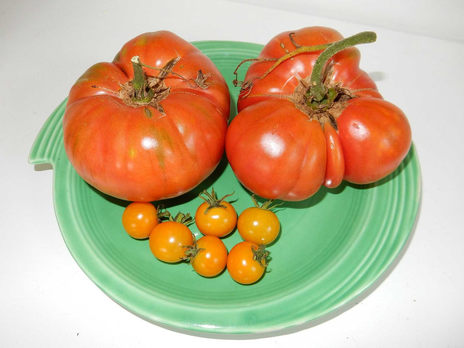 Sun Gold cherry and Brandywine tomatoes