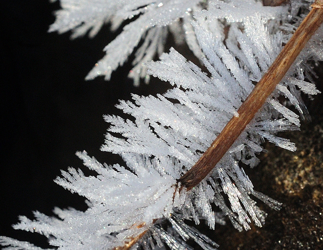 Here, some of the needles of hoarfrost are not just needles, but seem to have branches leaving the main stem. Some of these crystal formations resemble fern leaves. The branches seem to branch off at a 60° angle from the main stem.